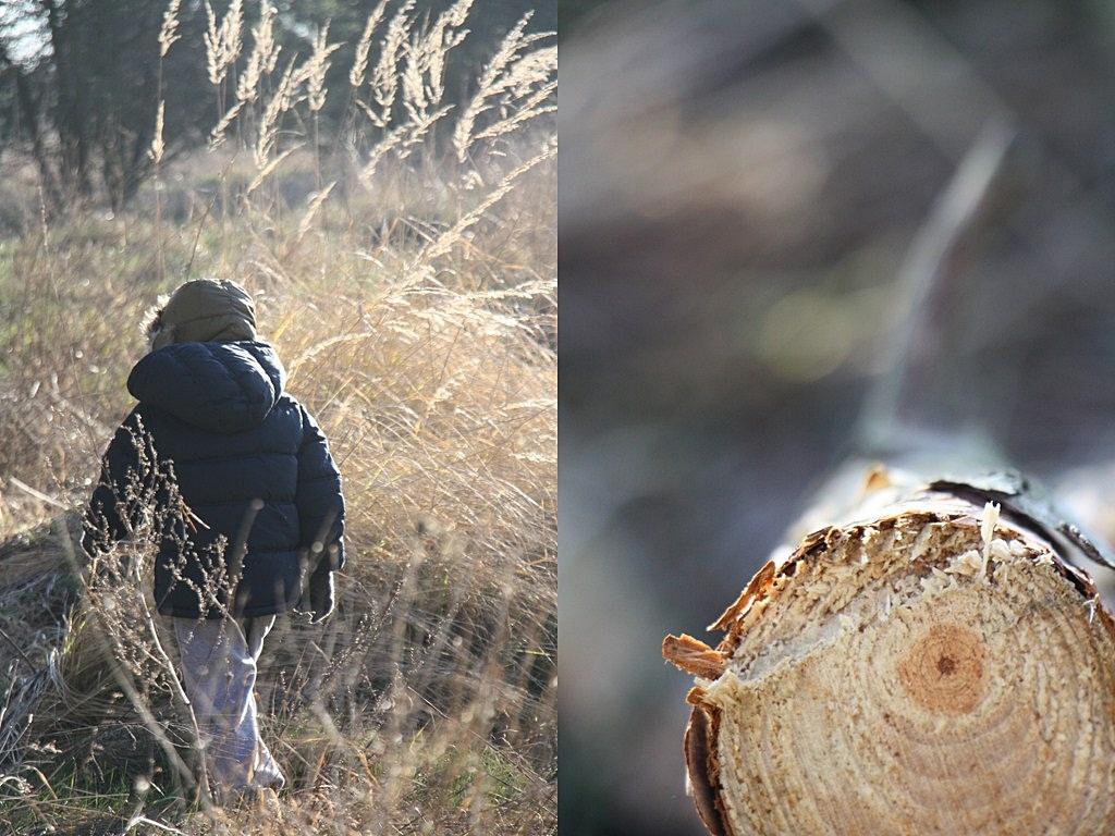 spacer w lesie zima