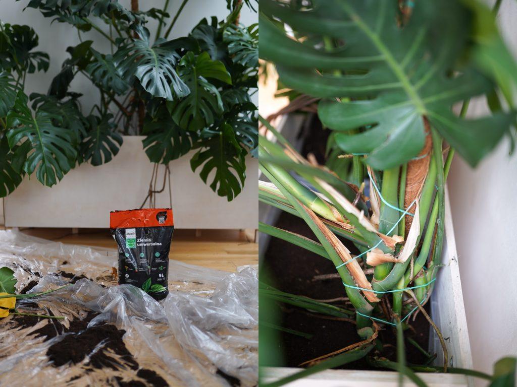 przyczepianie roślin do podpór jak to zrobić